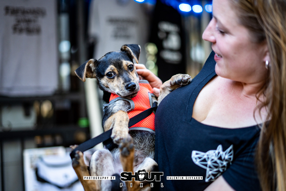 The DOG DAYS of ROCK Fundraiser at Wormhole